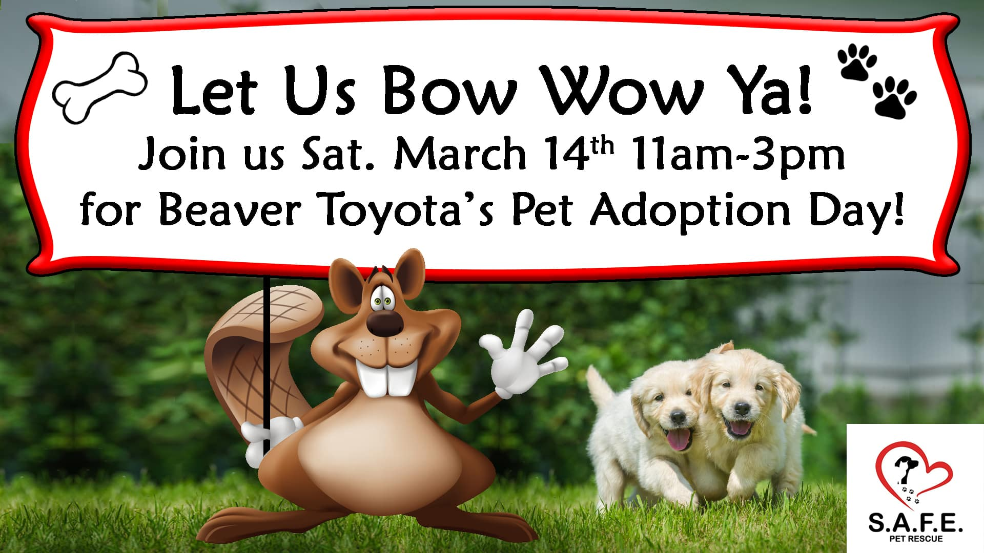 Beaver Toyota Pet Adoption
