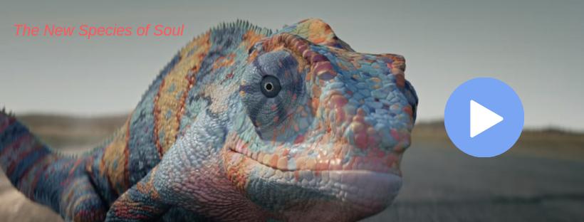 chameleon video c