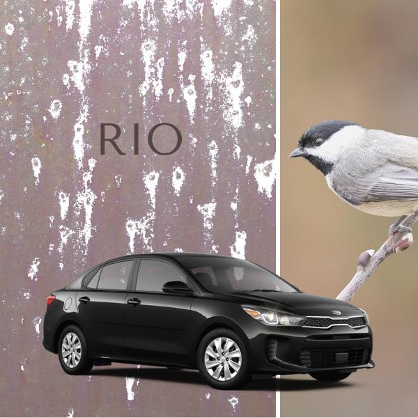 2020 Kia Rio $13,988