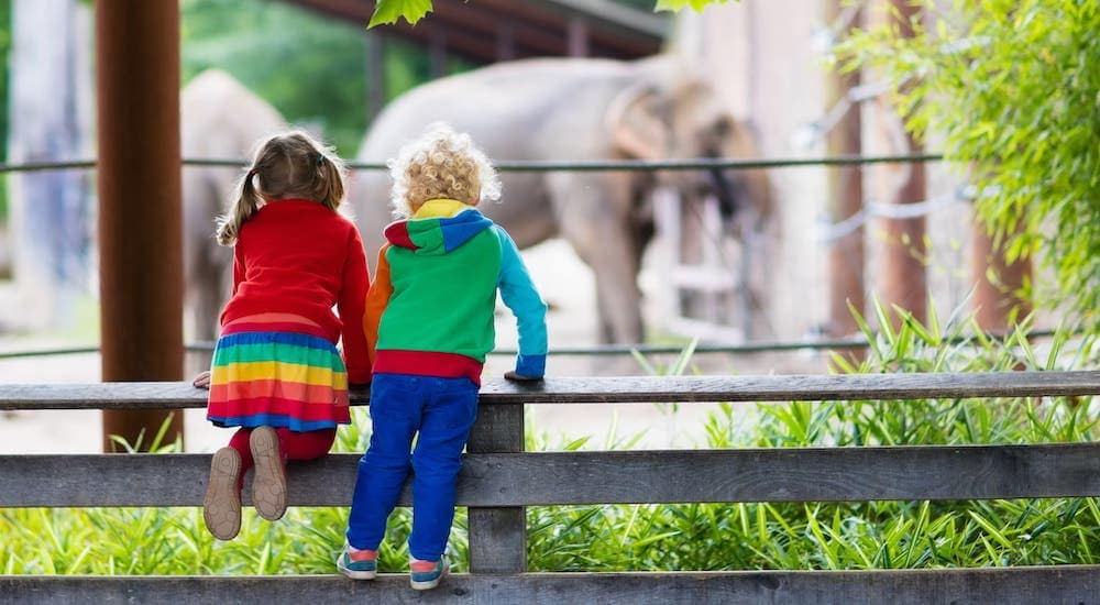 Two children are leaning over a fence admiring an elephant at a zoo.