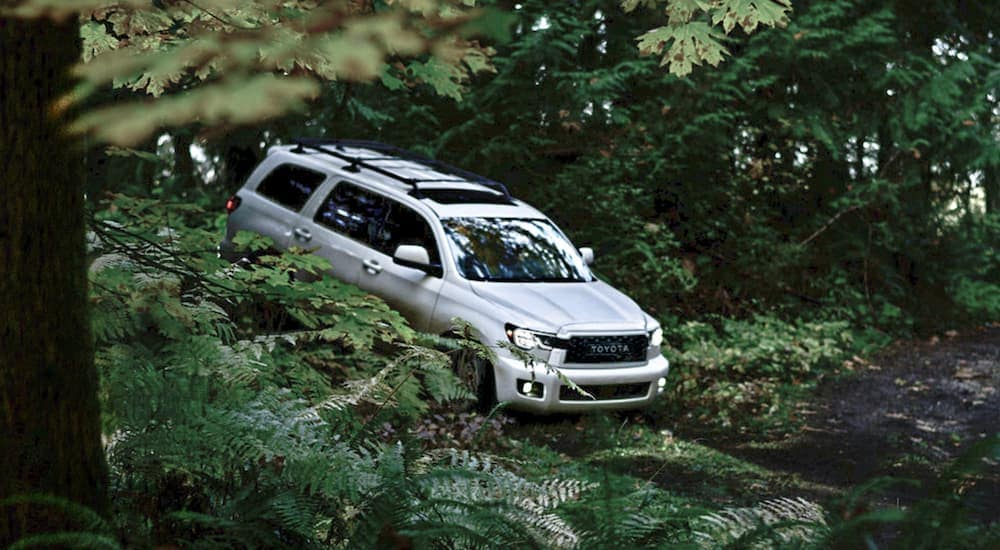 A white 2020 Toyota Sequoia, one of the larger Toyota SUVs, is off-roading in the woods.