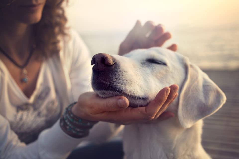A woman petting a white dog