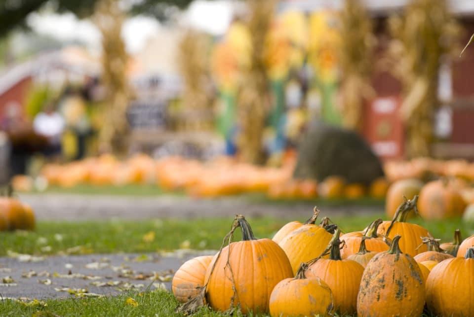 Fall For Warrenton