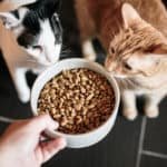 A large bowl with cat food, and two curious cats looking at it