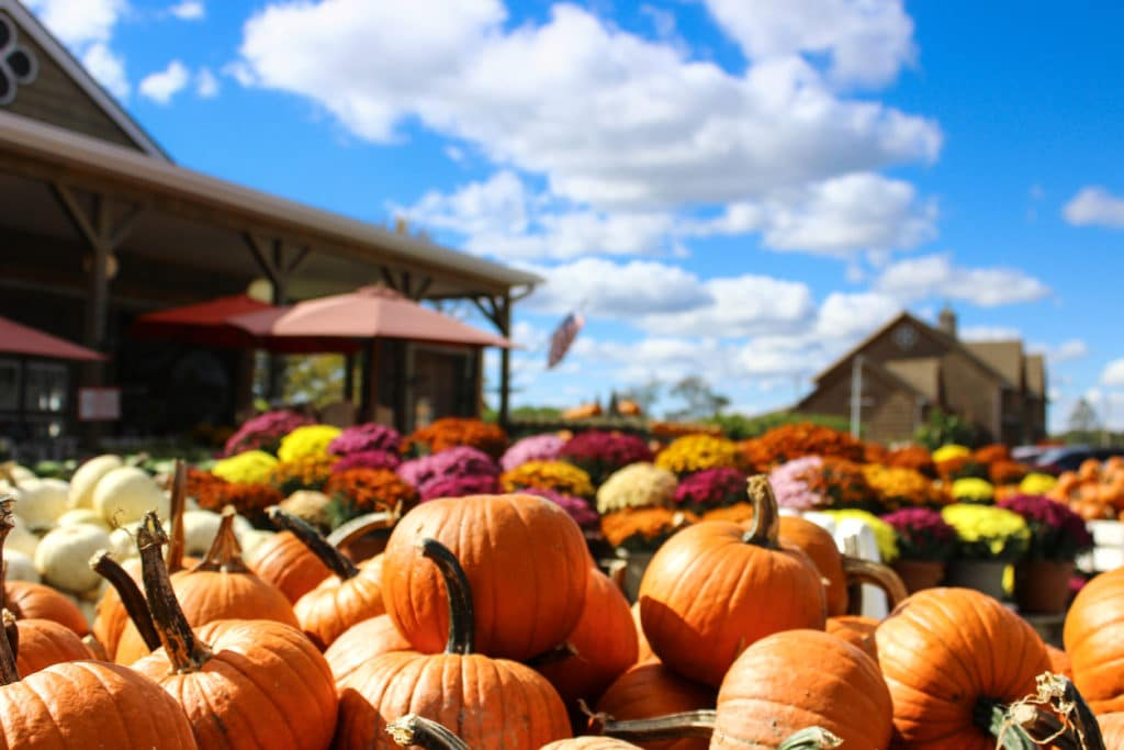 Fall Pumpkin Harvest Festival