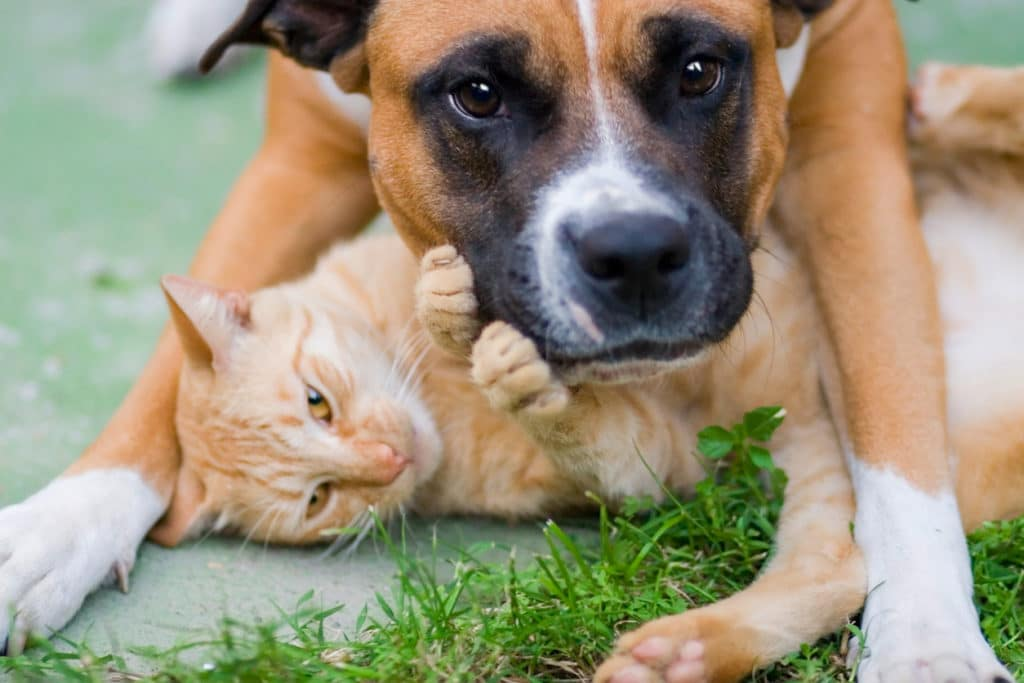 Hampshire County Pet Adoption Program