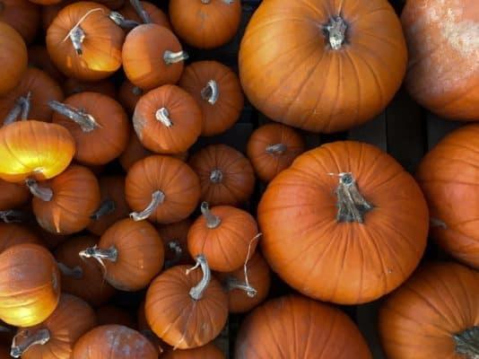 Multiple Pumpkins Top Down