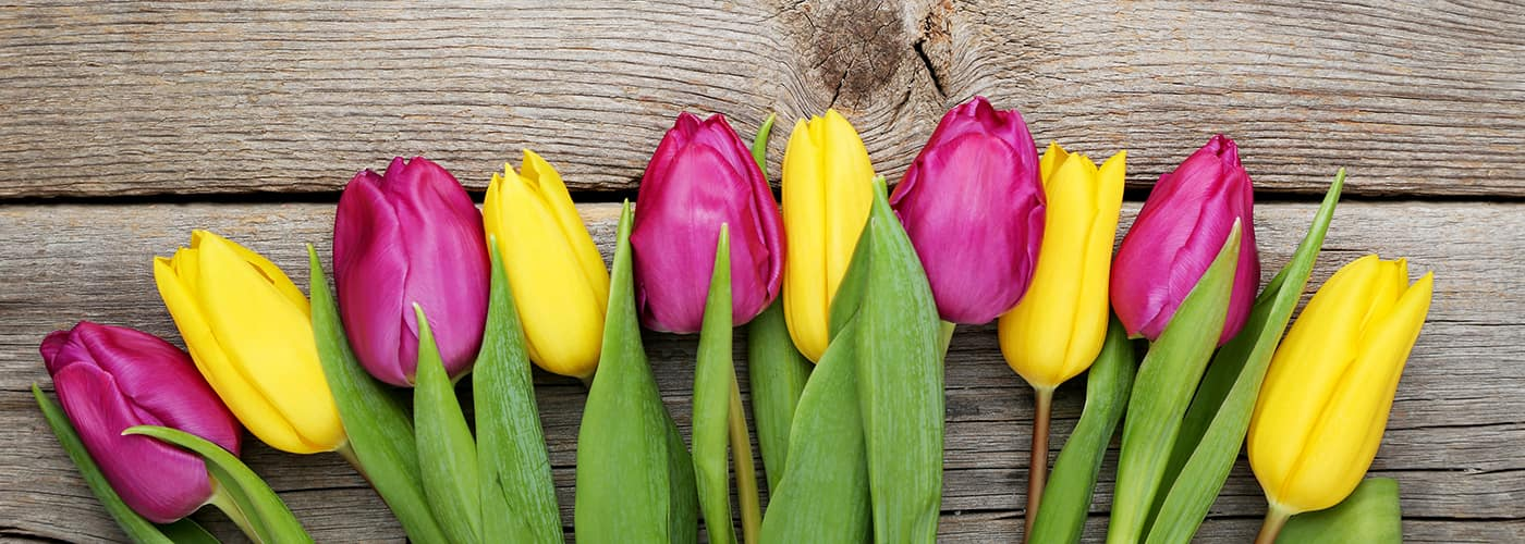florists in newton nj