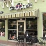 Cat cafe near Orlando