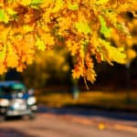 fall car care from Toyota of Clermont.