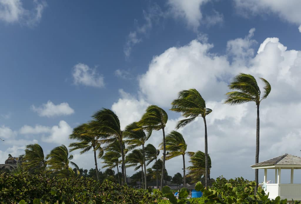 High winds tips from Toyota of Clermont