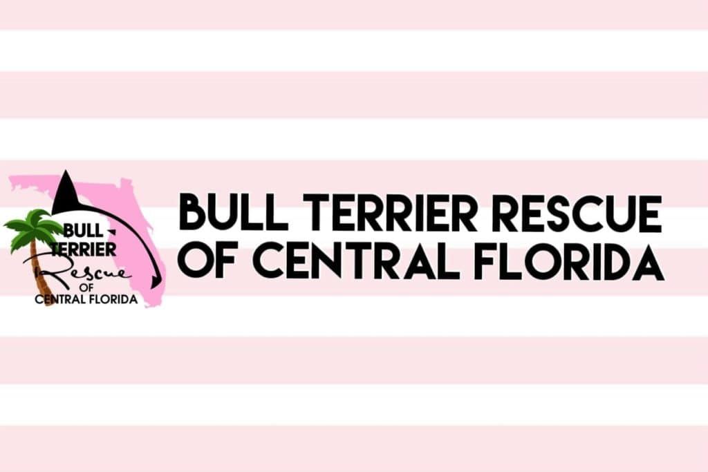 Bull Terrier Rescue of Central Florida.