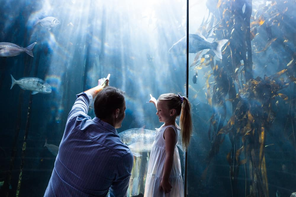 Father and daughter pointing at fish in aquarium
