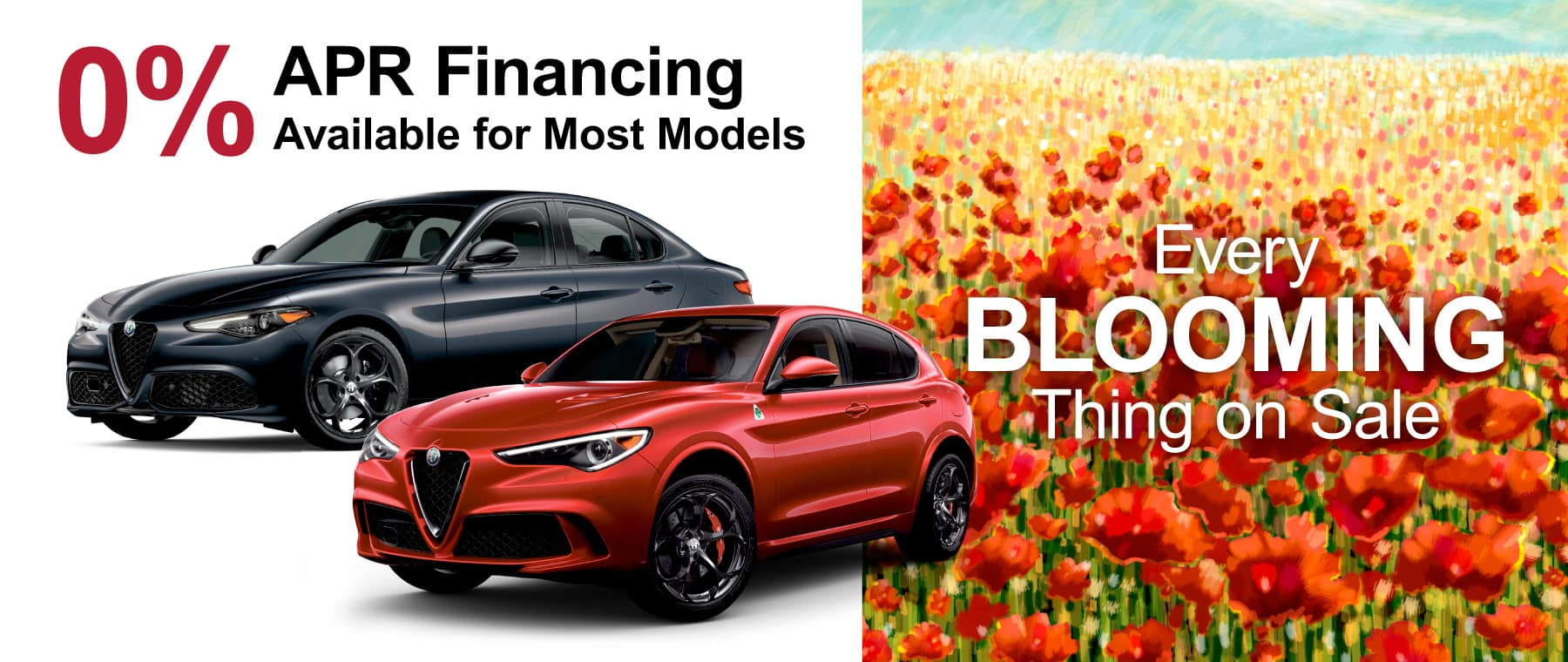 69048-ZARS_1800x760-Blooming_Alfa